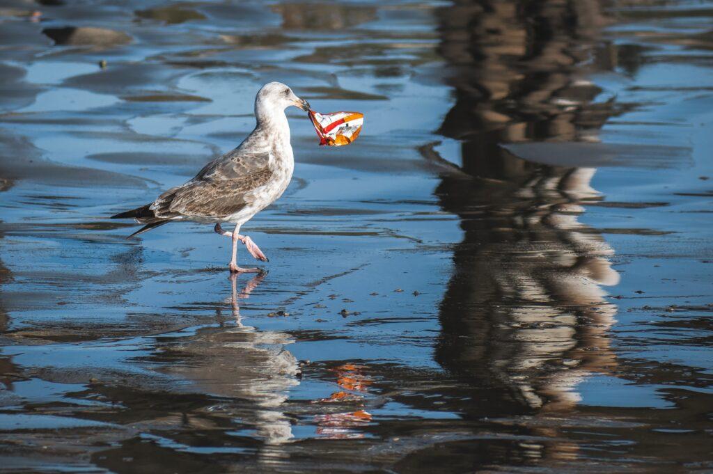 Contaminación en los mares